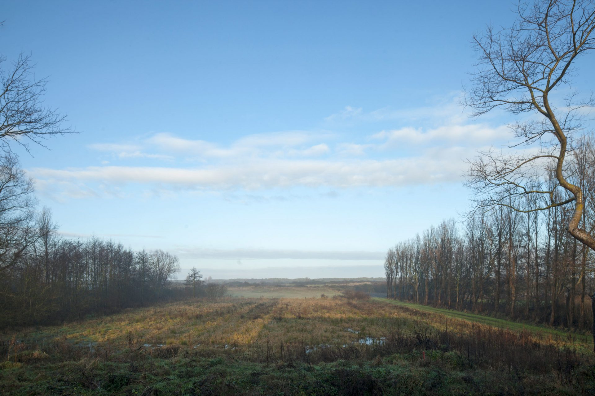 Goeree Open Field