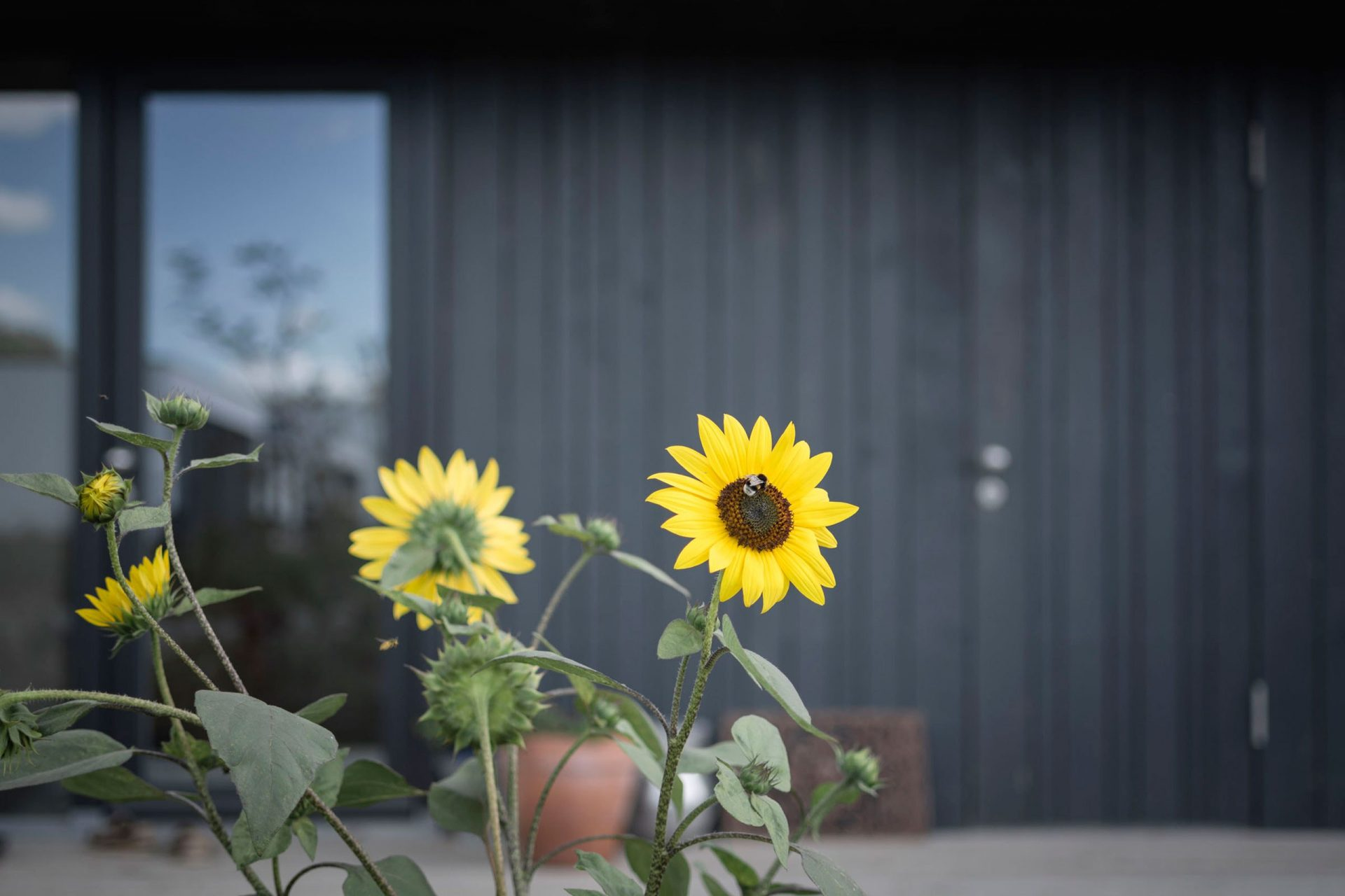 Oosterwold Flower