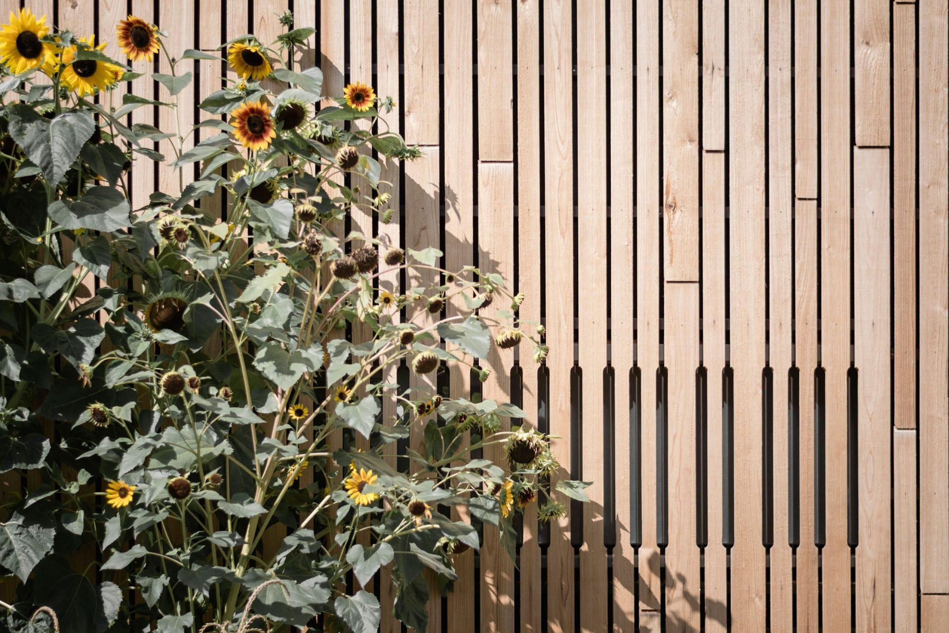 Leonidas Detailandsunflowers