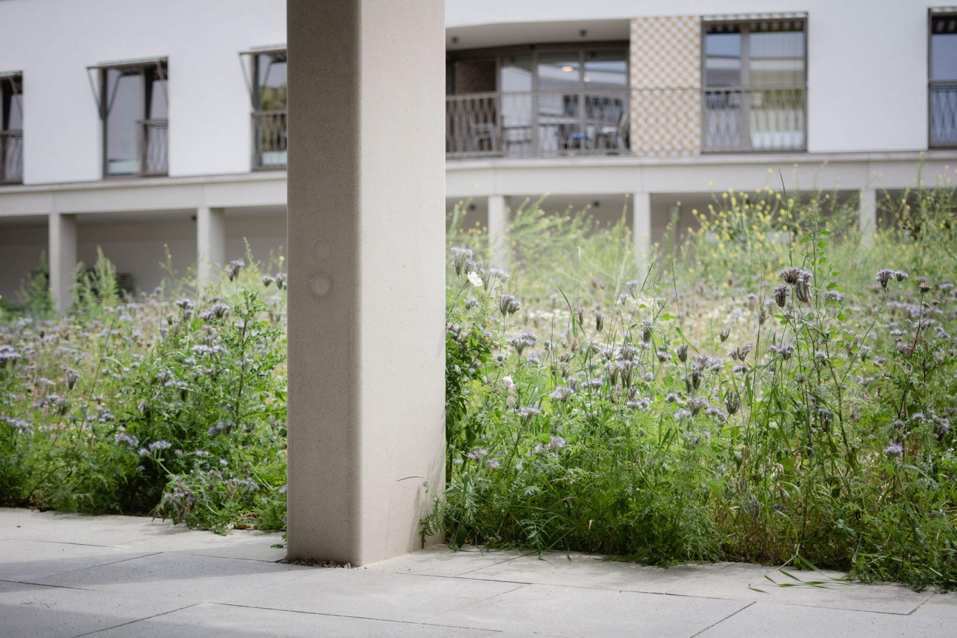 Machelen Garden Grass